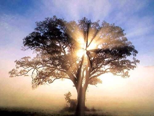 ? Promesa bíblia de Sanación 1 Pedro 2:24 ?